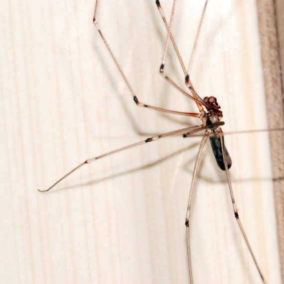 Spiders, Pest Control in Goffs Oak, Cheshunt, EN7. Call Now! 020 8166 9746